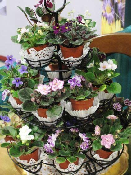 miniature african violets    pots  pretty sweet