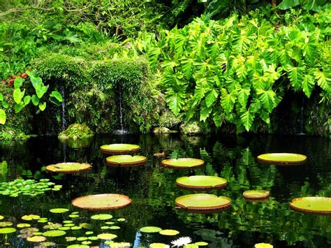 florida s best botanical gardens travel channel