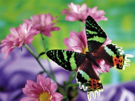 imagenes mariposas bellas fondos de hermosas mariposas