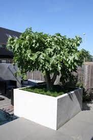 Bomen In Pot Op Terras by 1000 Images About Voortuin On Bakken Tuin