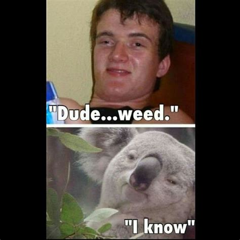 High Koala Meme - meme meme koalas and weed on pinterest
