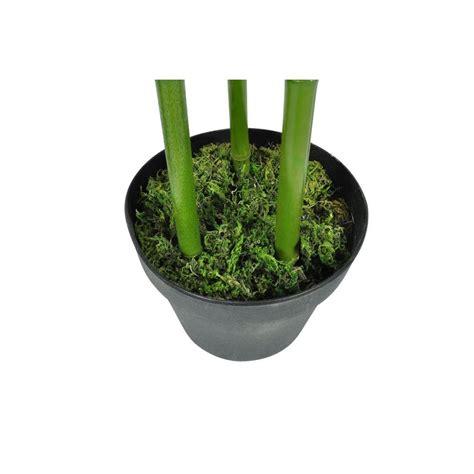 piante ornamentali per interni piante ornamentali da interno set di 4 bamb 249 190 cm