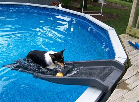 backyard dog pool dog backyard pool slide backyard design ideas