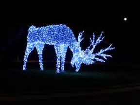 a reindeer lit up with christmas lights and the moon outsi