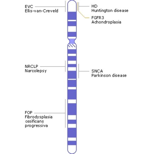 disease on y chromosome what is chromosome 4