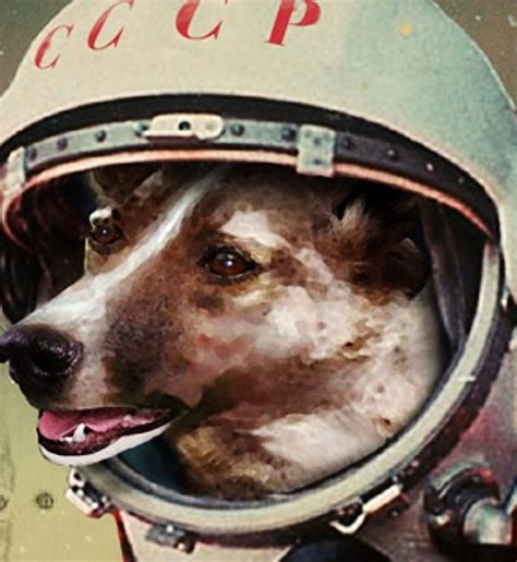 soviet space dogs laika the animal in space