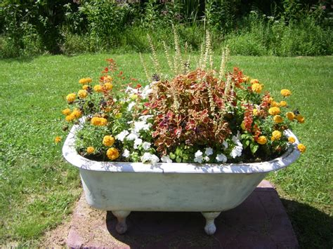 bathtub garden flower garden in tub gardening pinterest