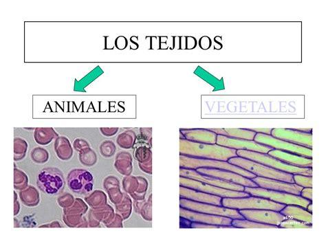 tejidos animales y vegetales los tejidos animales vegetales ppt descargar