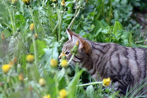 Piante Tossiche Per Gatti come riconoscere le piante tossiche per i gatti