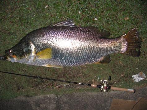 Box Ikan Mancing pemancing professional insi ketukan siakap