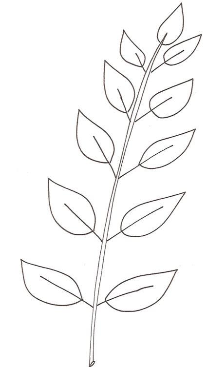 rami di fiori da colorare ramo da colorare cose per crescere