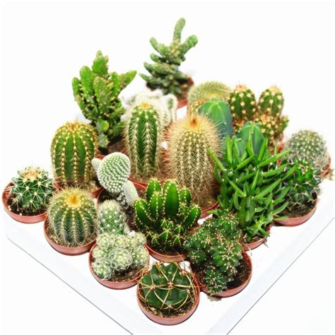 cactus planter hexagon mini planter choice of succulent or cacti by dingading terrariums notonthehighstreet com