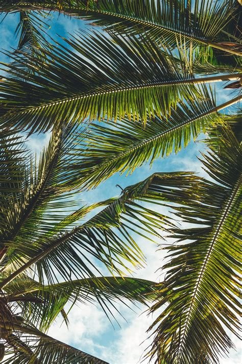 Live Palm Tree Wallpaper aesthetic palm tree phone wallpapers top free aesthetic