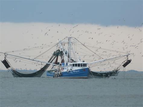 shrimp boat shrimp boats becky eldredge