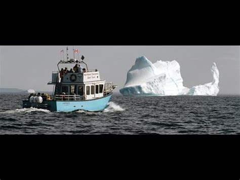 northland discovery boat tour northland discovery s iceberg whale and seabird tours