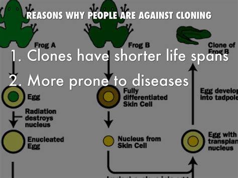 Cloning Essays by Cloning Essay Against