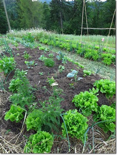 no dig vegetable garden how to prepare and take care of a no dig vegetable garden