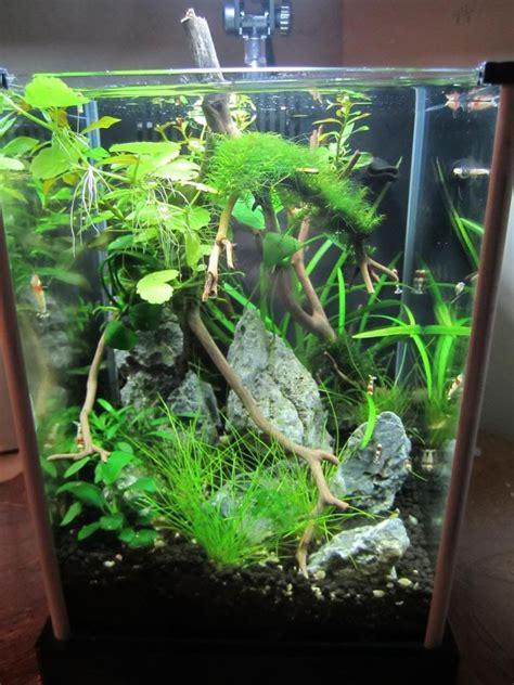Fluval Spec Aquascape by 2g Shrimp Tank Fluval Spec Aquaria Inspiration Fish