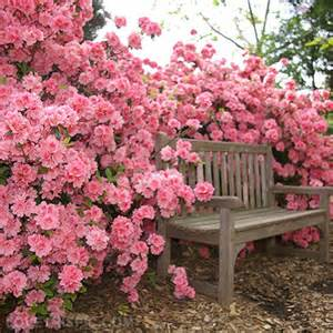 Pink Flower Garden Pink Flowers Pictures Photos And Images For And