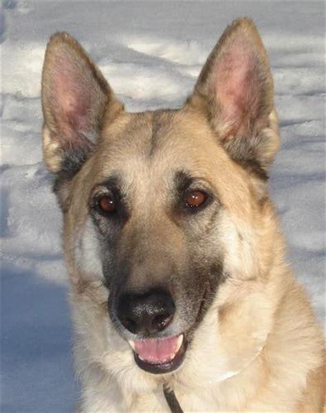 puppy adoption denver dumb friends league denver area humane shelter animal rescue home design idea