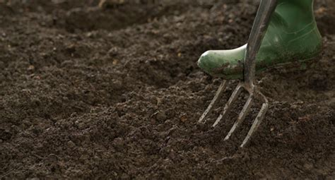 prepare soil for vegetable garden how to prepare your soil for planting texture plants