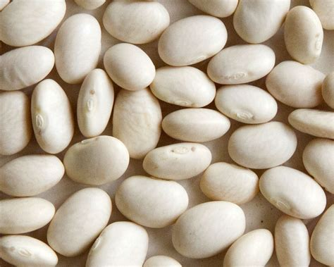 tiny white welcome to z 252 rsun idaho heirloom beans