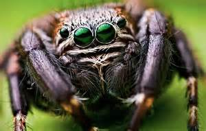 The biggest spider in the world facts dinoanimals com