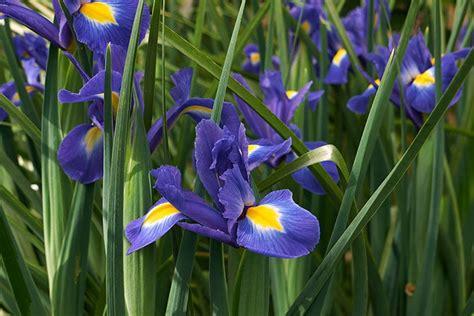 fiore simbolo di speranza il significato dei fiori d it repubblica