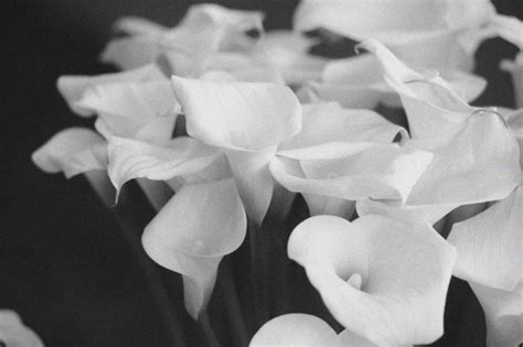 immagini di fiori in bianco e nero foto euroflora in bianco e nero 1 di 20 genova
