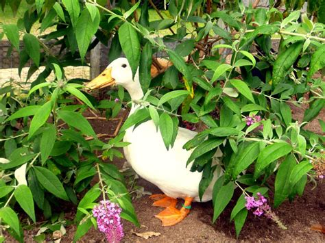 duck proof your landscaping hgtv