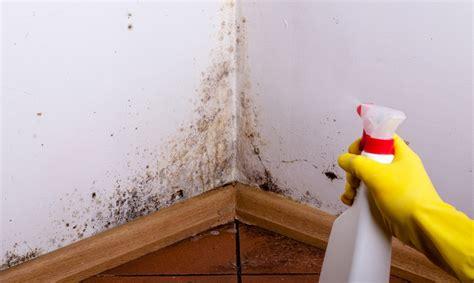 muffa in casa rimedi muffa in casa rimedi naturali e prevenzione ilvegano it