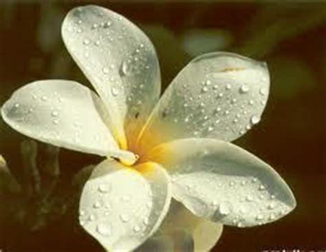 fiore simbolo di rinascita i simboli nei sogni canale psicologia