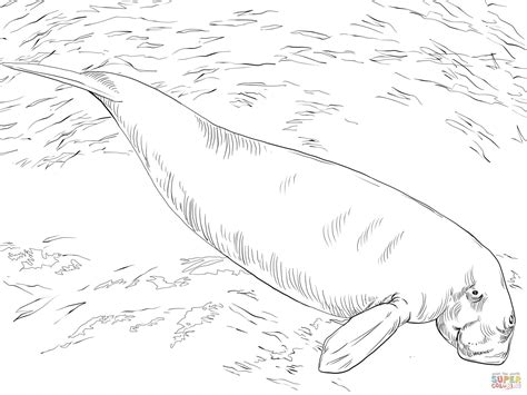 sea cow coloring page longhorn cow coloring page minecraft pages pictures to
