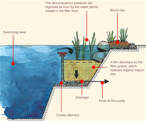How Section 8 Works by What You Need To About Swimming Pools Dig