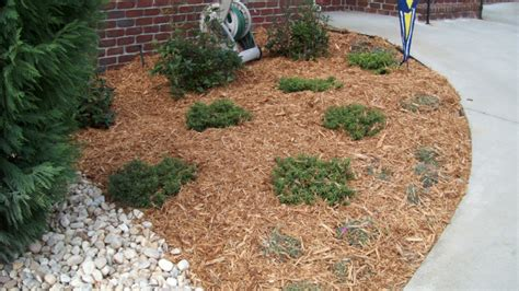 cedar mulch vegetable garden 10 types of garden mulch choose the right one for your