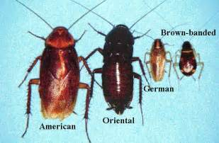 cockroaches in house lake pest