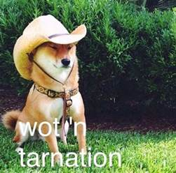 what in tarnation meme you will either or the new what in tarnation meme thechive