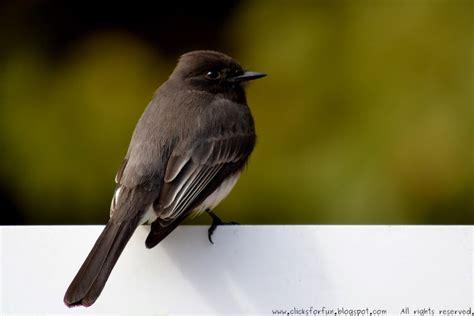fun clicks birdwatching vol 2