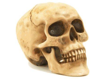imagenes de calaveras humanas image t 234 te de mort dessin 22980