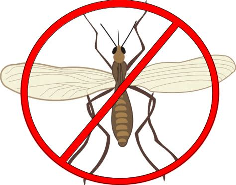 how to get rid of gnats in your bedroom 30 ways to get rid of gnats inside and outside the house