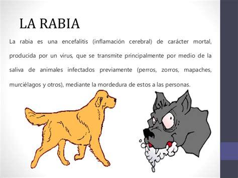 que rabia de juego rabia canina