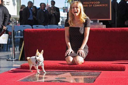 filme schauen une étoile est née reese witherspoon re 231 oit son 233 toile sur le hollywood walk