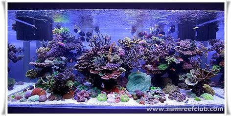 Video of the Thailand DSPS 1,000 gallon reef ? Advanced