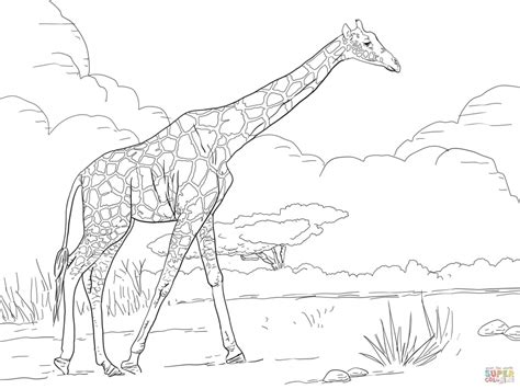 baby animal coloring pages realistic coloring pages get this giraffe coloring pages realistic animals 99562