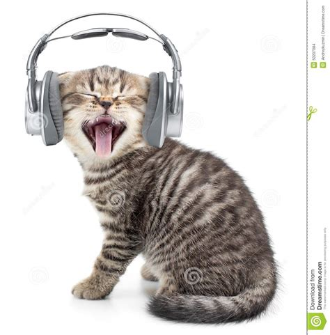 cat songs songs to sing to your cat and other feline favourites books singing cat or kitten in headphones stock photo