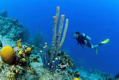 best dive destinations best diving destinations in the world take the plunge