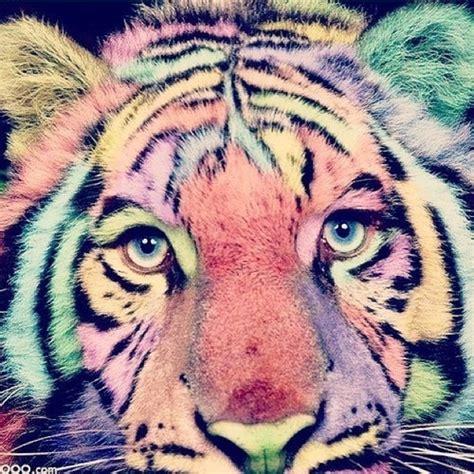 imagenes de leones tumblr tigre de bengala on tumblr