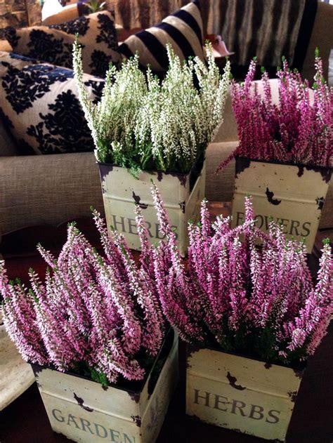 calluna vulgaris in vaso best 20 calluna ideas on garten tuin and