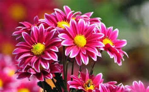 world best flower world s top 100 beautiful flowers images wallpaper photos free download