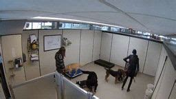 sniff hotel earthcam network